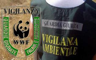 Caltanissetta, guardie volontarie aggredite da cacciatori: Wwf ammesso come parte civile