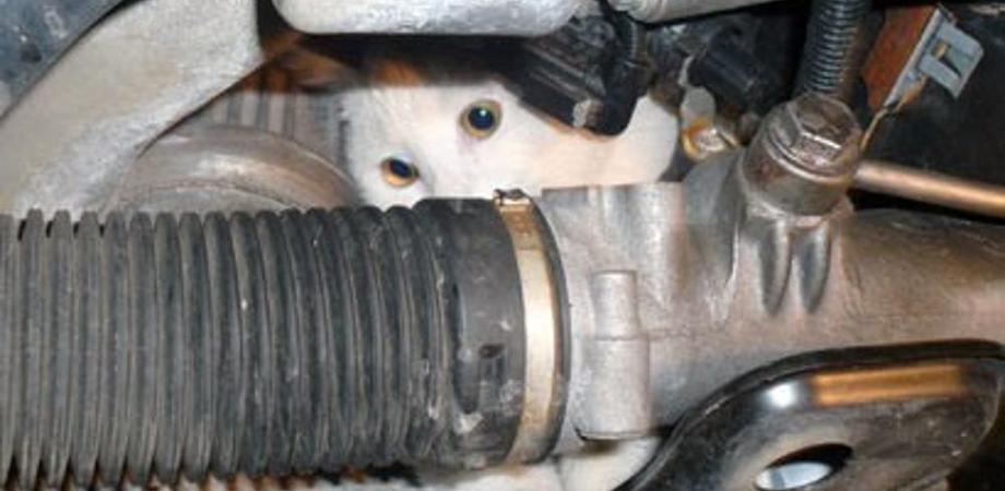 Caltanissetta, micio si nasconde nel cofano e i cani distruggono auto di una 50enne