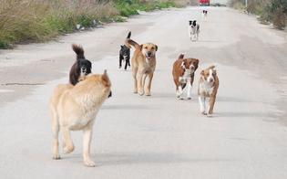 http://www.seguonews.it/caltanissetta-poliziotto-aggredito-un-branco-cani-randagi-finisce-ospedale