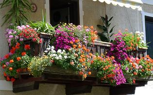 http://www.seguonews.it/caltanissetta-primo-concorso-balconi-fioriti-iscrizioni-entro-30-marzo