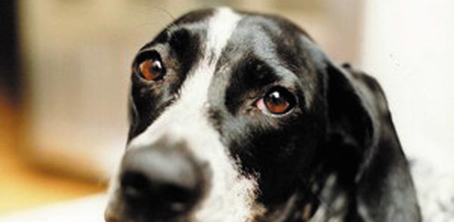 Caltanissetta, in giro a fare acquisti lascia il cane attaccato a una ringhiera per ore