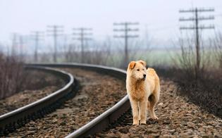 https://www.seguonews.it/caltanissetta-scende-dal-treno-un-cane-randagio-lo-azzanna-due-volte