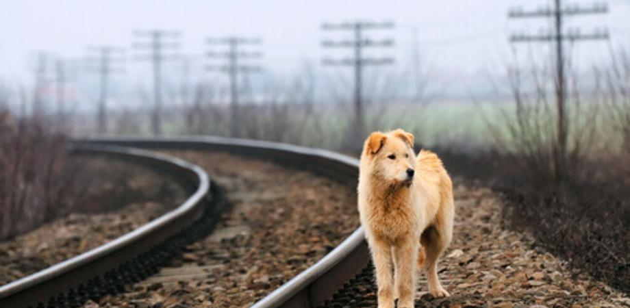 Caltanissetta, scende dal treno e un cane randagio lo azzanna per due volte