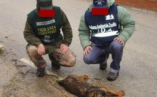 https://www.seguonews.it/san-cataldo-wwf-esche-avvelenate-uccidono-decine-cani-volpi-altri-animali