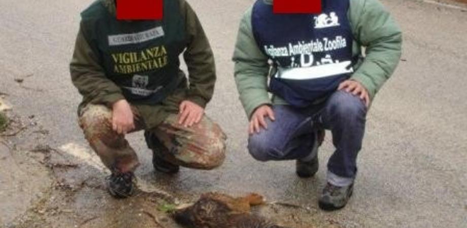 San Cataldo, Wwf: esche avvelenate uccidono decine di cani, volpi e altri animali