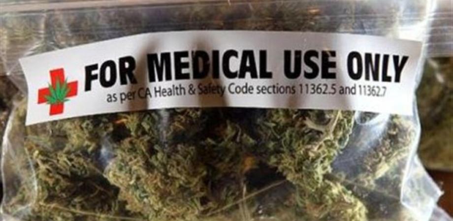 Cannabis terapeutica, passo avanti all'Ars. Movimento Cinque Stelle: subito tavolo tecnico