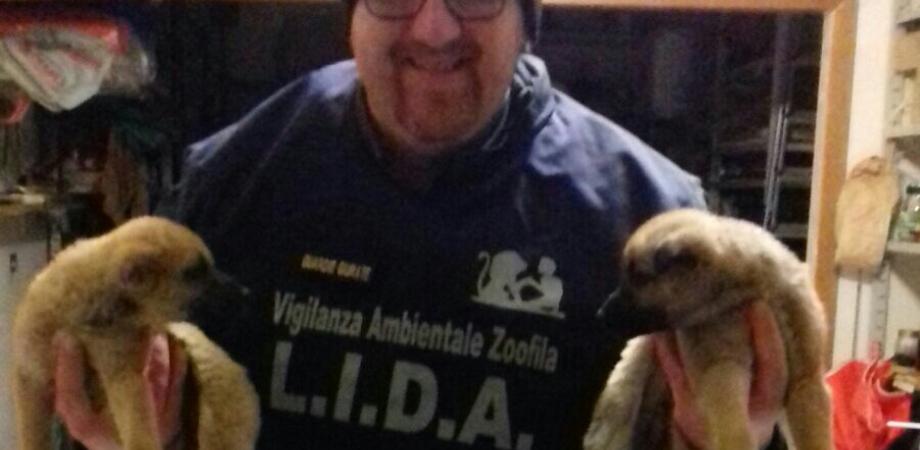 Ennesimo abbandono di cuccioli a San Cataldo: e ancora una volta ci pensa la Lida