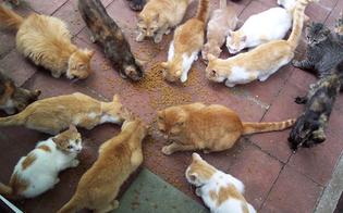 https://www.seguonews.it/caltanissetta-un-intero-condominio-litiga-gatti-intervengono-le-forze-dellordine
