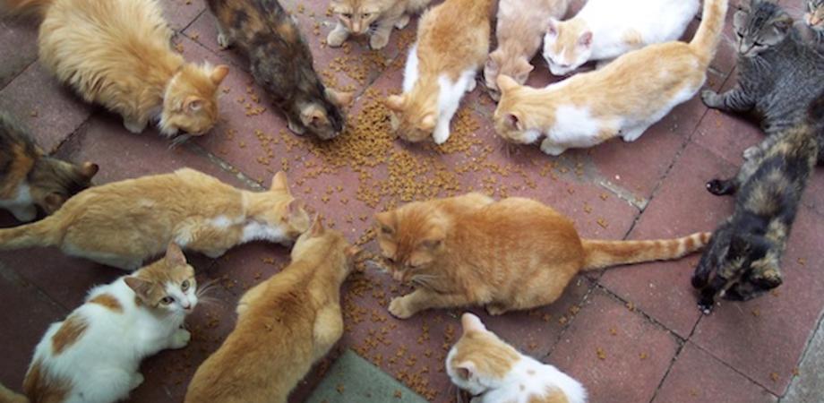 Caltanissetta, un intero condominio litiga per i gatti: intervengono le forze dell'ordine