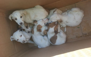 https://www.seguonews.it/caltanissetta-sette-cuccioli-abbandonati-davanti-al-comando-della-polizia-municipale