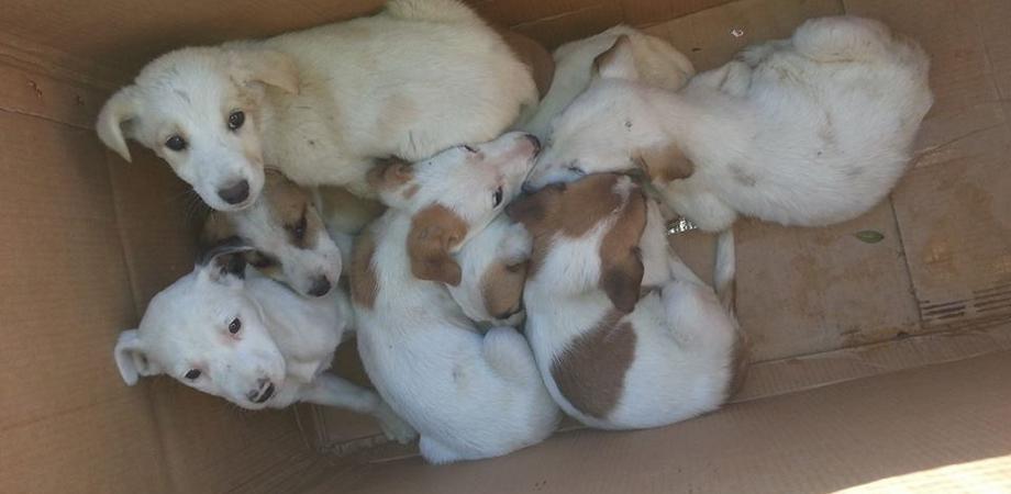 Caltanissetta, sette cuccioli abbandonati davanti al comando della Polizia Municipale