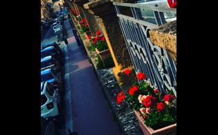 https://www.seguonews.it/caltanissetta-tocco-colore-citta-lassessore-margherita-fiori-restituire-decoro