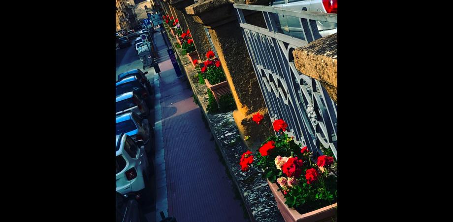 Caltanissetta, tocco di colore in città. L'assessore Margherita: fiori per restituire decoro
