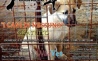https://www.seguonews.it/caltanissetta-cani-nessuno-un-seminario-gratuito-approfondire-norme-gestione