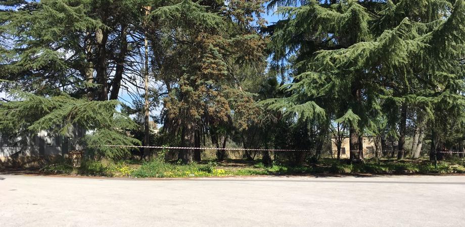 Caltanissetta, plauso del Partito Democratico all'Asp per il recupero del parco Dubini
