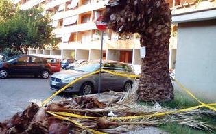 https://www.seguonews.it/caltanissetta-lassessorato-allambiente-recisi-65-alberi-pericolanti-potate-piante-siepi