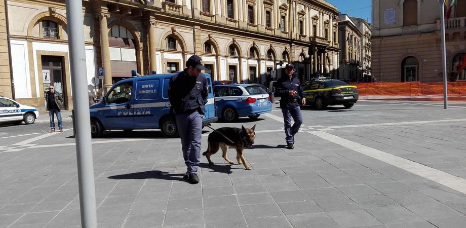 Caltanissetta, controlli in certo storico: cane poliziotto trova 5 grammi di stupefacente
