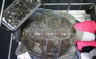 https://www.seguonews.it/tartaruga-operata-allo-stomaco-ingerito-5-kg-monete-gettate-dai-superstiziosi