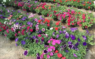 Riqualificazione Borgo Petilia: domenica Azzurra Cancelleri e Giovanni Magrì collocheranno piante ornamentali