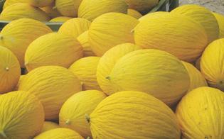Sorpreso a rubare meloni in un fondo agricolo: 57enne niscemese arrestato dalla polizia