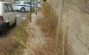 https://www.seguonews.it/san-cataldo-aree-verdi-abbandonate-il-m5s-chiede-la-manutenzione-e-rimozione-di-erbe-infestanti