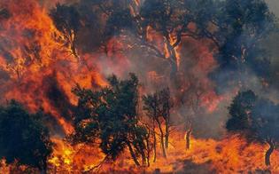 Sicilia devastata dagli incendi, Italia Nostra invita Crocetta alle dimissioni