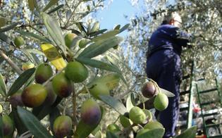 http://www.seguonews.it/villafranca-sicula-dipendenti-del-comune-si-fingevano-malati-per-raccogliere-le-olive