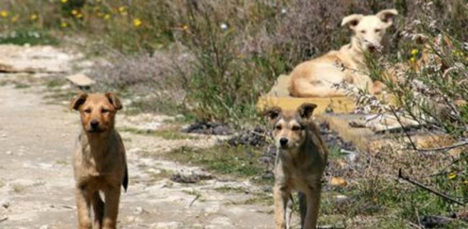 Mussomeli, barista aggredito dai cani randagi operato a una gamba