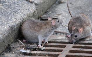 http://www.seguonews.it/gela-proseguono-gli-interventi-di-derattizzazione-non-toccare-o-danneggiare-le-esche