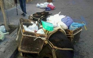 A Castelbuono asino utilizzato per il trasporto dei rifiuti stramazza al suolo per la fatica: è polemica