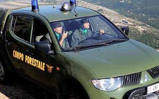 Rinnovo contratto integrativo regionale per 1570 forestali della provincia di Caltanissetta