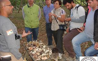http://www.seguonews.it/patentino-per-la-raccolta-dei-funghi-al-via-la-v-edizione-del-corso-di-micologia