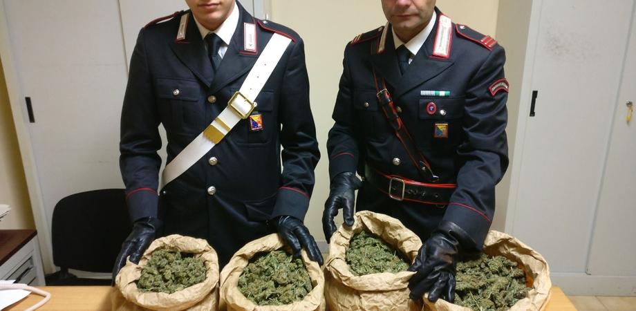 Sequestrati in un casolare di Mazzarino, oltre quattro chili di marijuana. Scattano due arresti