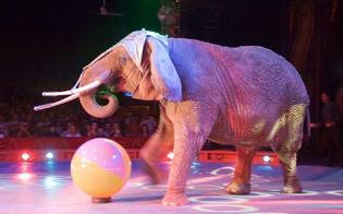 http://www.seguonews.it/stop-agli-animali-nei-circhi-anche-in-italia-arriva-lok-definitivo-