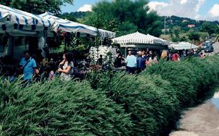 https://www.seguonews.it/caltanissetta-sabato-23-maggio-riprendera-il-mercatino-settimanale-di-via-ferdinando-i