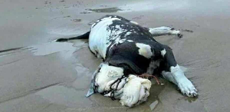 Orrore a Cefalù, cane imbavagliato e gettato in mare