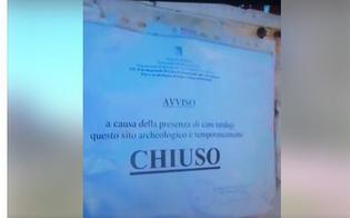 http://www.seguonews.it/gela-e-la-citta-dove-chiude-tutto-per-la-presenza-dei-cani-o-dei-vandali-protesta-la-cgil