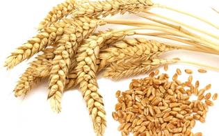 Caltanissetta, difesa dei prodotti agricoli locali: la giunta approva delibera per sospendere la ratifica del Ceta