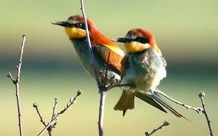66° campionato mondiale di Ornitologia: podio per tre nisseni