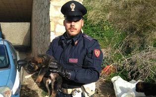 Caltanissetta, chiusi dentro un sacchetto di plastica: 4 cuccioli salvati dalla Polizia Ferroviaria