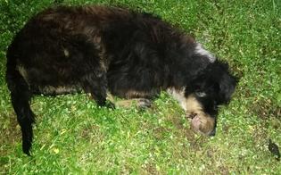 http://www.seguonews.it/cane-torturato-e-impiccato-ricompensa-per-chi-trova-i-colpevoli