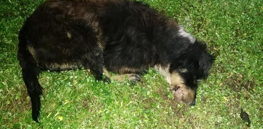 Cane torturato e impiccato, ricompensa per chi trova i colpevoli