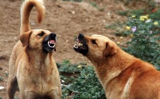 http://www.seguonews.it/cani-randagi-nei-pressi-dellospedale-di-gela-il-nursind-consentiamo-agli-operatori-di-utilizzare-il-parcheggio-interno