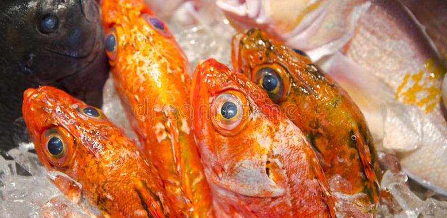 Pesce privo di etichettatura, multe per 7 mila euro a Mazzarino e Gela. Sequestrati 16 chili di prodotti ittici