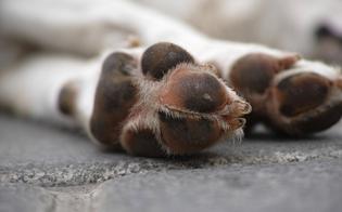 http://www.seguonews.it/caltanissetta-lega-il-cane-con-una-catena-allauto-e-lo-trascina-per-metri-denunciato-pensionato