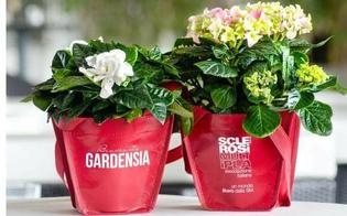 Benvenuta Gardensia. L'Aism sarà presente in tutta la provincia di Caltanissetta per raccogliere fondi per la ricerca
