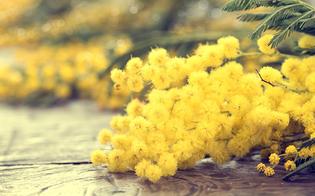 http://www.seguonews.it/giornata-internazionale-della-donna-le-iniziative-dell8-marzo-a-caltanissetta