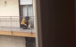 http://www.seguonews.it/belpasso-filmata-mentre-picchia-e-prende-a-morsi-il-suo-gatto-casalinga-denunciata