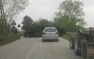 http://www.seguonews.it/caltanissetta-danni-per-il-vento-grosso-albero-si-abbatte-sulla-strada-in-contrada-misteci-