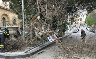http://www.seguonews.it/forti-raffiche-di-vento-persiste-allerta-meteo-a-caltaissetta-chiusi-il-cimitero-e-le-ville-comunali